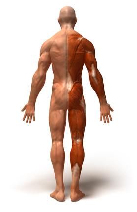Muskelerkrankungen